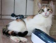 Katzen Geschwister Blümchen und Timon