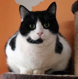 Katze Sternchen sucht Zuhause zu: Kleinanzeigen aus Helpsen - Rubrik Katzen