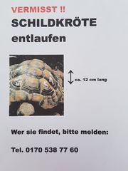 VERMISST Griech Landschildkröte vermisst