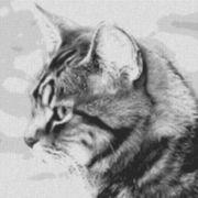 Vorlage für Ministeck Cat7 80x80cm