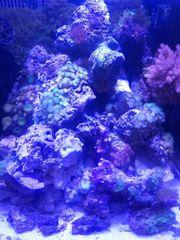 Lebendgestein Riffgestein für Meerwasser Aquarium