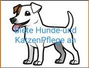 Hundefriseur in bietet mobil Hundepflege