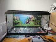 aquarium aquatlantis mit filter gebraucht