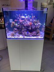 Meerwasseraquarium 300 Liter Komplettauflösung