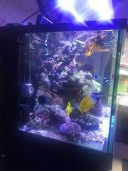 diverse Meerwasserfische XL Fangschreckenkrebs Docs