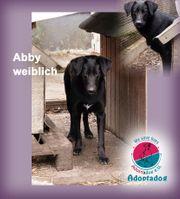 Abby - die Schüchternen übersieht man