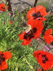 Familie sucht Garten Stückle Gütle