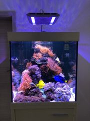 Anemonen Xenia Ableger Fische