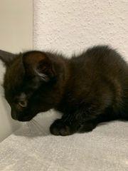 Kitten suchen noch ein zu