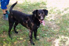 Hunde - Gonza - Bewegungsmotivator sucht Menschennähe