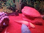 Junge Axolotl in gute Hände