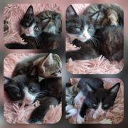 Kitten Baby Kater Socke geimpft
