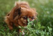 Betreuung für unsere Hunde gesucht