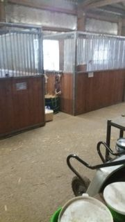 Einzelbox Pferd Pferdeboxen Stall frei