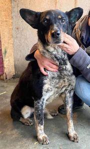 Kato - freundlicher Hundemann