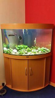 RESERVIERT Aquarium Juwel Trigon 190