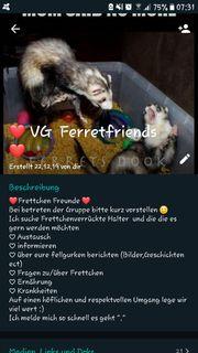 Frettchen whats app gruppe