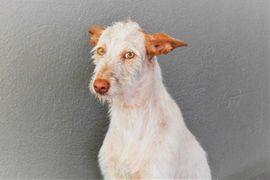 Hunde - Venus sucht ein besonderes Zuhause
