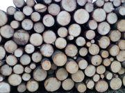 Brennholz Fichte wegen Platzmangel abzugeben