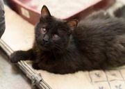 BAMBA - das blinde süße Katzenmädel