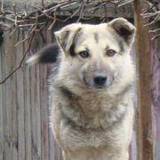 Toby - ein Hund mit tausend