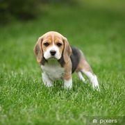 In der Suche nach Beagle