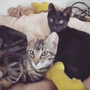 2 fröhliche Kätzchen suchen Liebe