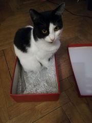 Lina Katze aus dem Tierschutz