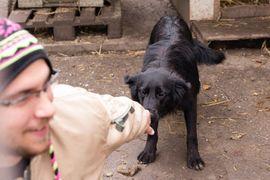 Limba - Braucht Zeit und Vertrauen: Kleinanzeigen aus Kirchzell - Rubrik Hunde
