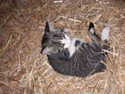 Katzenkind sucht gutes Zuhause