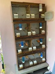 Vogelkäfige Zuchtboxen mit Zubehör und