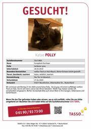 Katze Polly vermisst