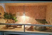 OSB Holz Terrarium