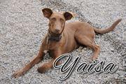 Fühlen Sie sich von Yaisa