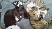 Katzen kater