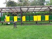 Verkaufe Bienenvölker Carnica auf Zander