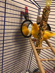 Verkaufe Kanarienvogel Käfig