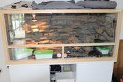 Leopardgeckogruppe mit Terrarium