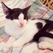 Kätzchen Bibiana freut sich über