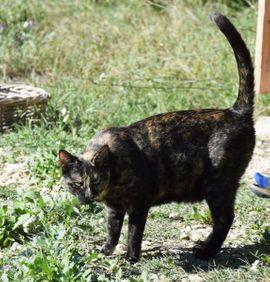 LENA - Wunderbares Katzenmädchen sucht ihre: Kleinanzeigen aus Wilhelmsfeld - Rubrik Katzen