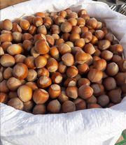 10kg Haselnüsse aus Polen-1A Qualität