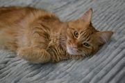 Ganz liebe Katze 2J kastriert