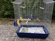 kanarienvögel 5 kg Futter Käfig