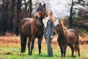 Stellplatz für Pony gesucht Offenstall