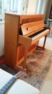 Sauter Piano 114 Ragazza Kirschbau-Eibe