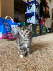 Katzenbaby sucht neues Zuhause