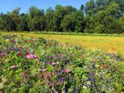 Landwirtschaftliches Grundstück für Bienenwiese zu
