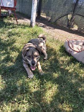Tierschutzvereine, -heime - Kessie sucht ihre Familie