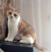 Katze mit Stammbaum Zucht Frei