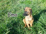 Schenken Sie Ema ihr Für-Immer-Zuhause